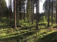 Okolní les - Úbislav V Dílech