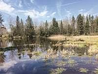 Chlumský rybník - chalupa k pronajmutí Volary - Chlum