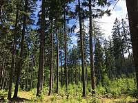 Les nad chalupou - pronájem Černé Údolí