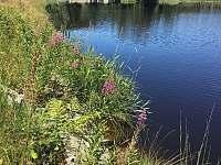 Mlýnský rybník - Černé Údolí