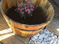 Zahradní dům a terasa u bazénu 2 - chalupa k pronajmutí Hlohová
