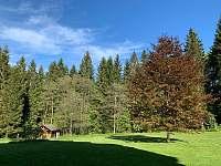 strom před domem - Schöneben