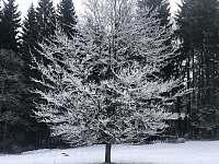 Strom před domem v zimě - Schöneben