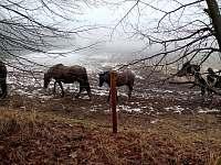 pastviny s koňmi - Zdíkov - Zábrod