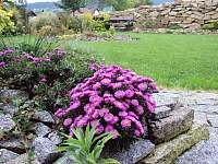 Zahrada - Stachy
