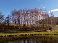 Lesík nad rybníkem