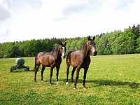 Naši koně - Nýrsko - Blata