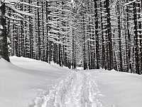 Cesta z města ? :) - Stachy - Lesní Chalupy