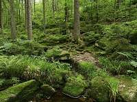 Boubínský prales - chalupa k pronájmu Sviňovice