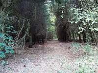 Okolí penzionu - Nezdice na Šumavě