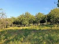 jabloňový sad obklopuje chatu - k pronajmutí Zelená Lhota