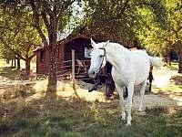 naši koně - jízda na koni možná - pronájem chaty Zelená Lhota