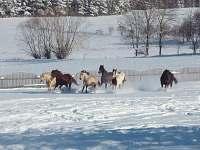 naše koně se prohánějí ve sněhu