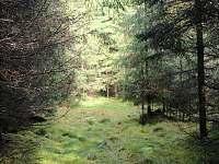 les u chalupy - Černá v Pošumaví - Muckov
