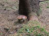 Chalupa v Pěkné - houbařská sezóna -