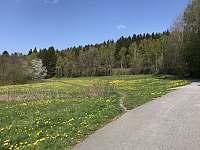 Cyklostezka kolem Lipenské přehrady - pronájem vily Lipno nad Vltavou