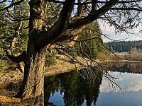 Rašeliniště Kapličky - 7 km od domu - Přední Výtoň