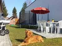 Uzavřený dvorek - ideální pro pobyty s dětmi a se psy