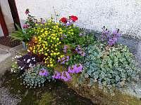 dvůr s květinami - chalupa k pronájmu Bukovník