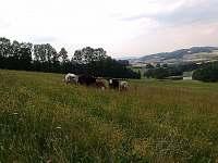 okolní louky a pastviny - Horní Němčice u Strážova