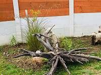 Zahrada - rekreační dům k pronájmu Horní Planá