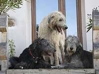 psi jsou vítáni
