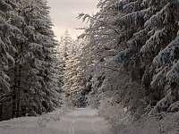 Cesta na Klostermannovu rozhlednu - Nicov - Řetenice