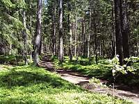 Cestou na Královský kámen - pronájem chalupy Nicov - Řetenice