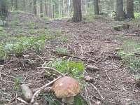 houby2 - chalupa k pronájmu Nicov - Řetenice