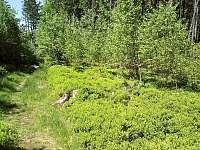 Lesy kolem Řetenic - Nicov - Řetenice