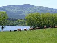 Houbařka - pronájem chaty - 18 Hory u Perneku