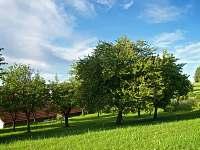 zadní zahrada - Bílenice