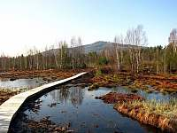 Rašeliniště - pronájem chaty Volary