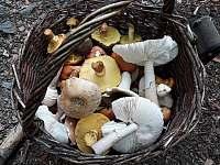 podzim- houby v okoli - Černá v Pošumaví - Plánička