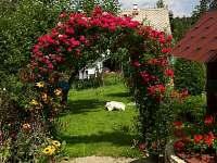 zahrada růžový oblouk