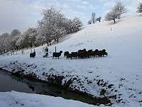 Naše ovečky - chata k pronajmutí Dlouhá Třebová