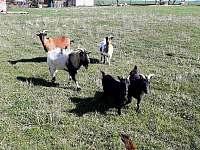 Naše zvířata - chata k pronájmu Dlouhá Třebová