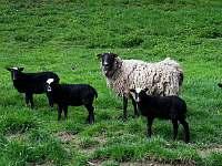 Ovečky - chata k pronajmutí Dlouhá Třebová