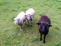 Naše ovečky - Machov - Nízká Srbská