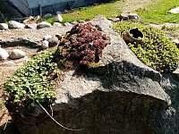 zahrada - chalupa k pronájmu Otovice u Broumova