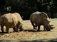 ZOO Safari - ubytování Bílá Třemešná - Dvůr Králové