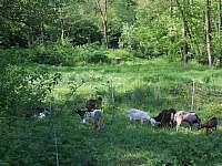 přírodní rezervace - ubytování Hroubovice
