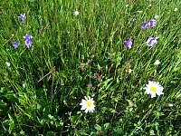 louky okolo jsou neutuchajícím zdrojem květin do interiéru - Záhory
