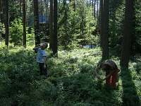 Na borůvkách - chata k pronájmu Proseč