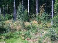 výhled z ložnice do lesa na srnečka-nutno zvětšit!