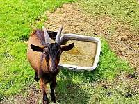 Kozy - pronájem chalupy Hlinsko - Chlum