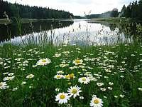 Rybník Januš - Svobodné Hamry
