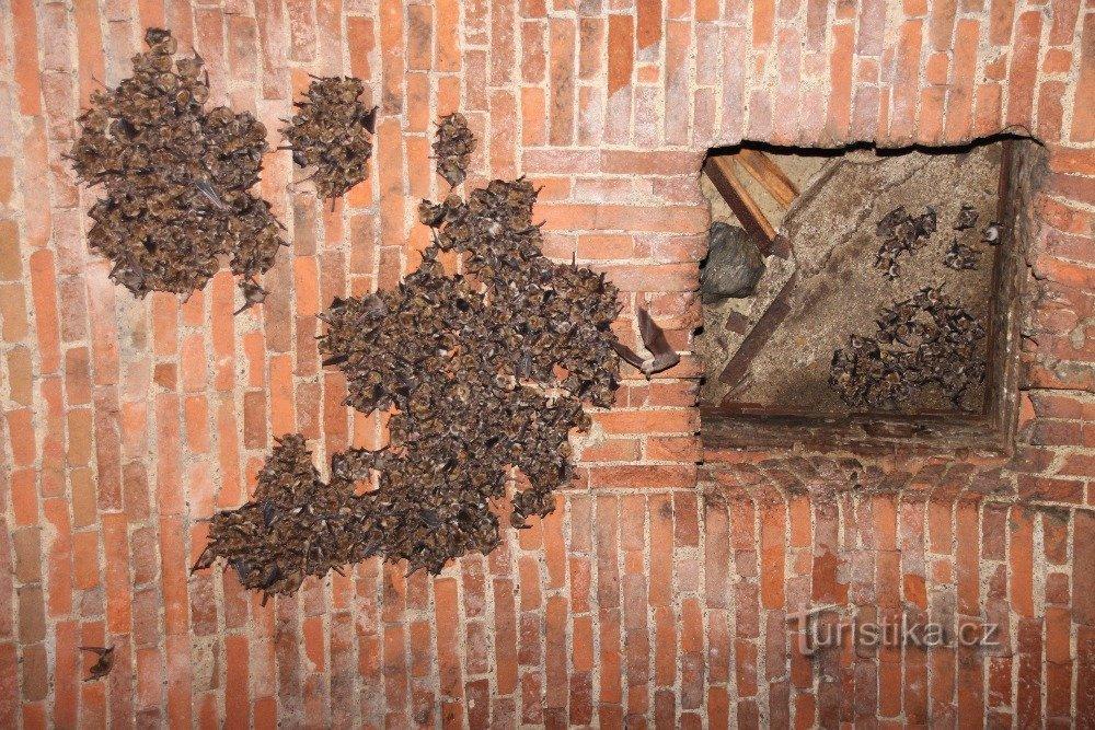 Klášter Kladruby nabízí neobvyklé letní bydlení pro netopýry