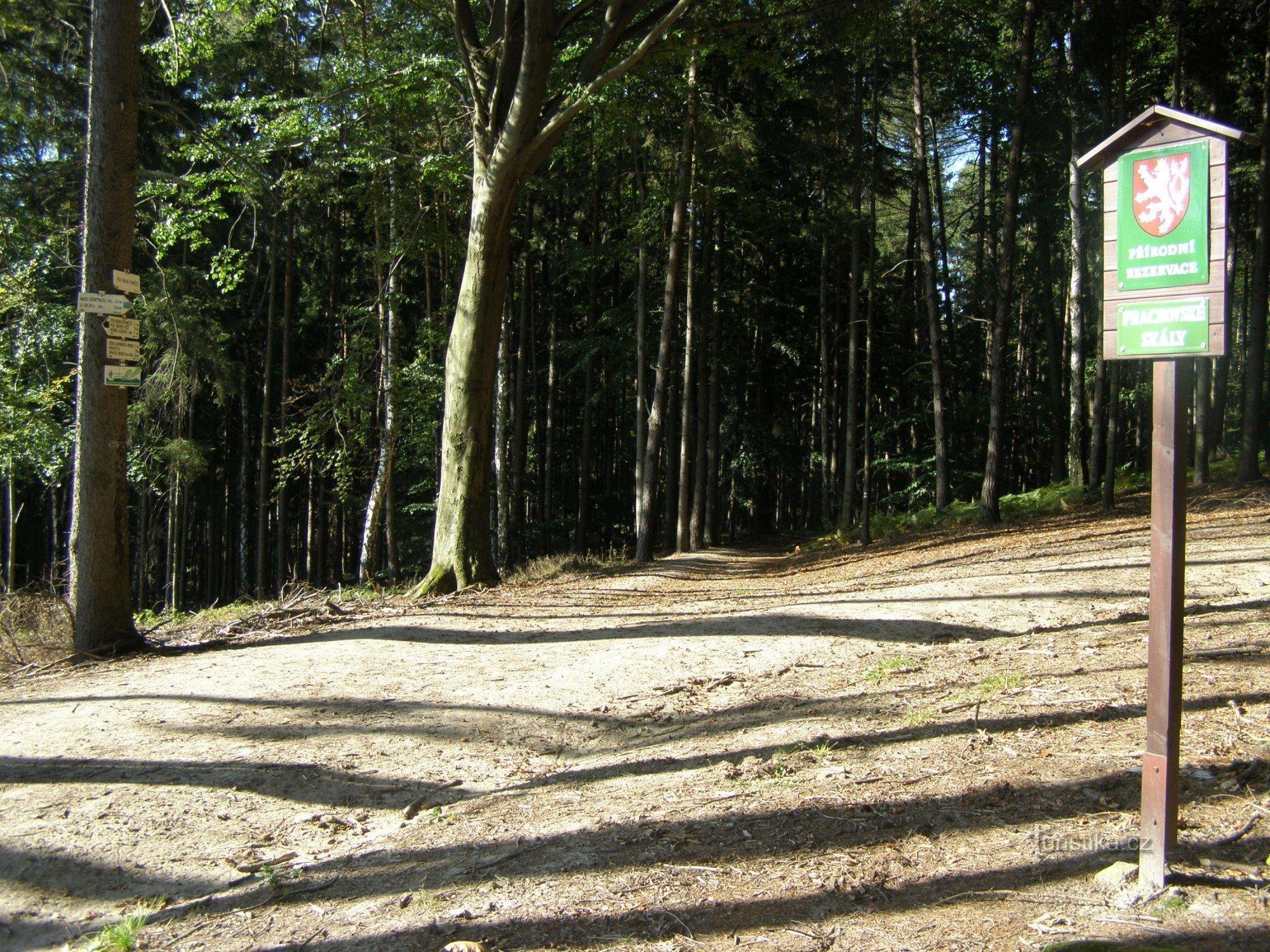 Prachovské skály - turistické rozcestí Pod Malou Svinčicí