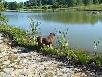 Náš rybník. - pronájem apartmánu Zajíčkov